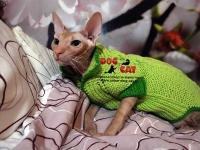Зелёный свитер с косичками