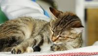 Антицарапки для кошек ( 40 шт)